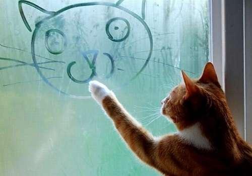 почему потеют пвх окна